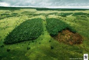 Foto : Ecoportal.net