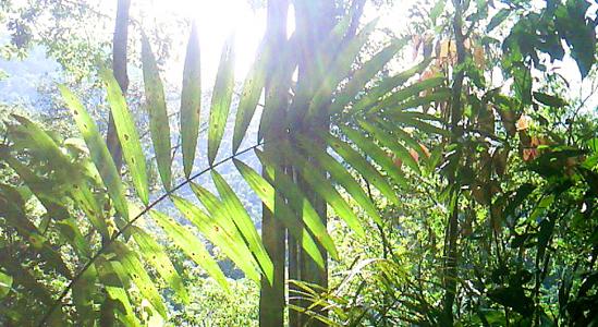 El proceso de restitución de tierras avanza rápidamente en el Putumayo