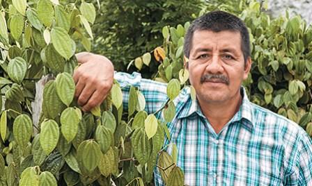 Rodrigo Trujillo es el gerente de Condimentos Putumayo. Aunque disfruta más de la vida en el cultivo, su capacidad de liderazgo lo llevó a convertirse en la cabeza del proyecto.