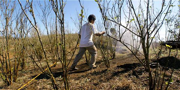 Foto: Archivo Comunidades de Putumayo denuncian que las fumigaciones con glifosato les generan enfermedades dermatológicas, digestivas y respiratorias.