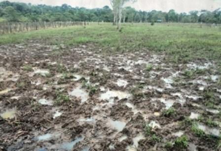 Los productores esperaban el verano para el primer trimestre del año, pero hasta el momento la sequía ha sido temporal. Foto: Manuel Ortiz.