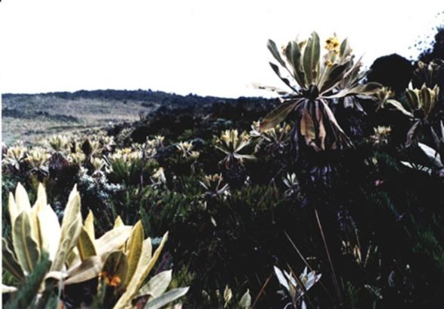 Páramo de Bordoncillo - Foto : http://santiago-putumayo.gov.co/