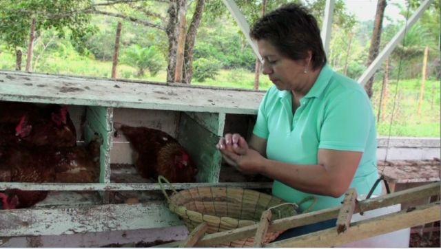 Proyecto Gallina Feliz – Putumayo