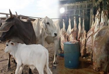 Miembros del sector ganadero de Orita manifiestan que el abigeato se siente con más fuerza debido a la 'mala administración' de la planta de beneficio local, conocida como La Cristalina. Foto: ICA - Polfa.