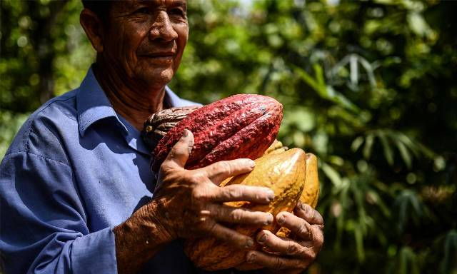 Cacao, herramienta para la paz