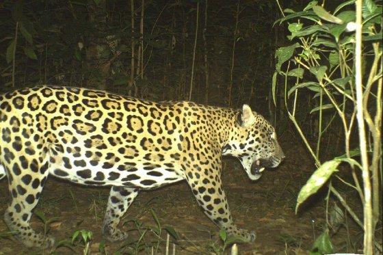 """La """"finca"""" para compensar la pérdida de biodiversidad"""