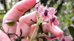 Una orquídea colombiana, entre las especies más raras del 2017
