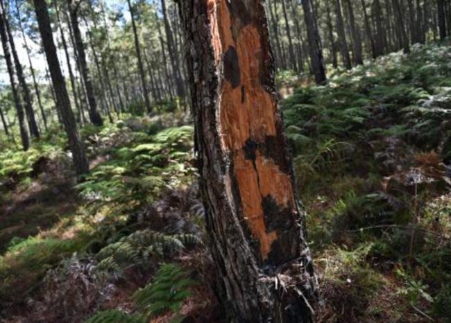 Se dispara tasa de deforestación en el país
