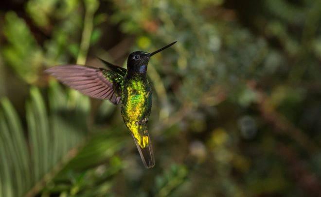 10 especies de aves que sólo pueden verse en Colombia y fascinan a expertos y avistadores