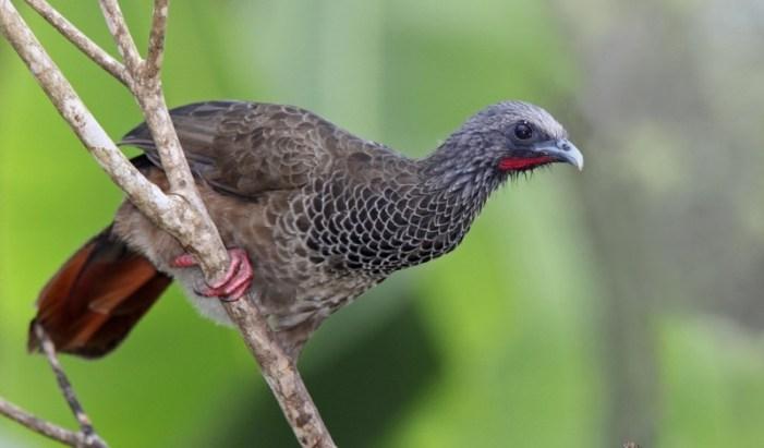Colombia exhibe turismo de avistamiento de aves en Inglaterra