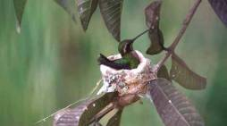 Las cinco aves colombianas que desaparecerían por culpa del cambio climático
