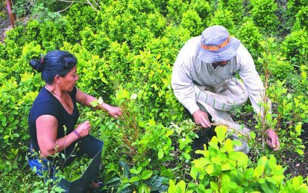El respaldo de la Corte Constitucional a la erradicación de cultivos ilícitos