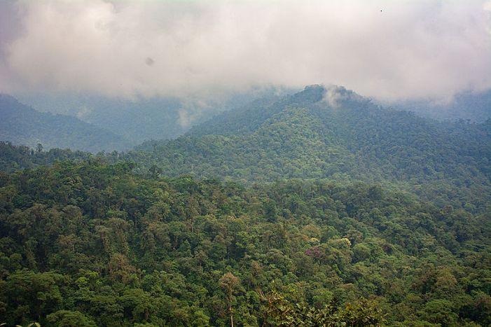 ¿De dónde provienen los árboles de la Amazonía andina?