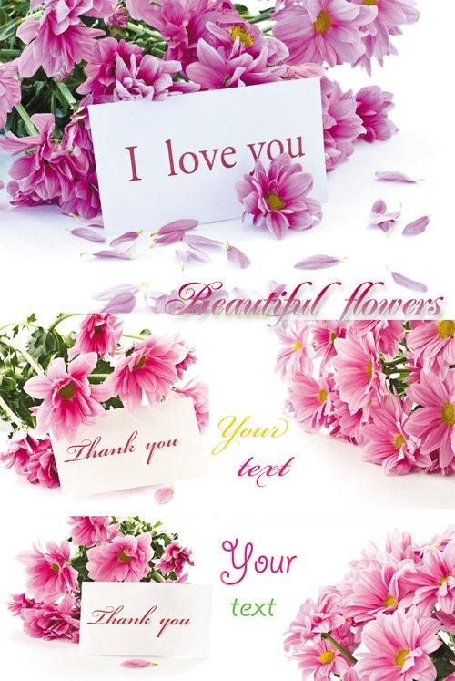 Цветы с карточками для текста, букеты цветов - растровый ...