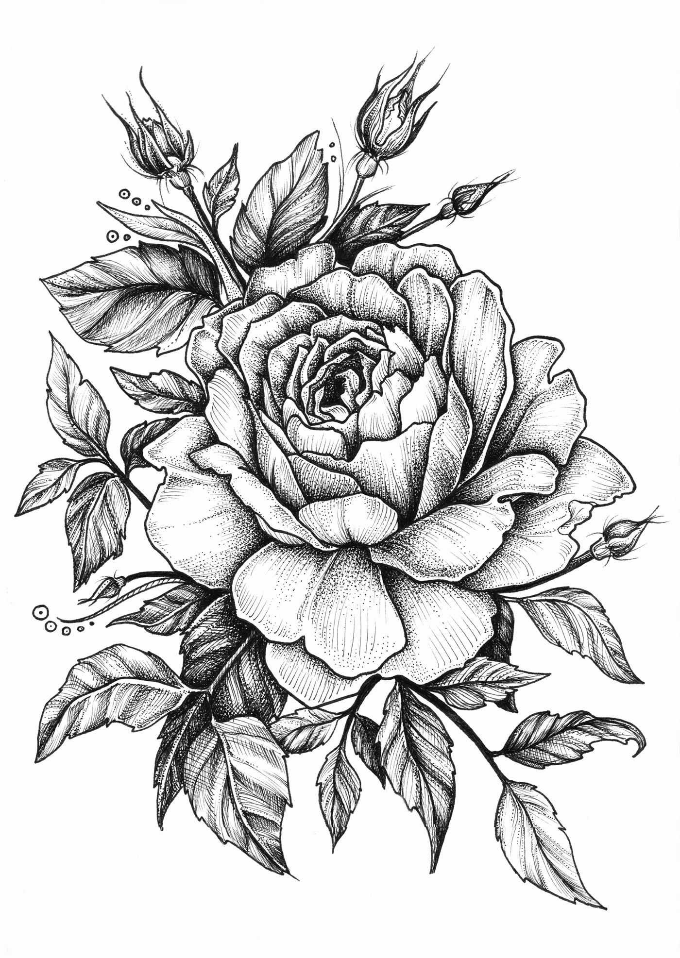 Rose On Behance