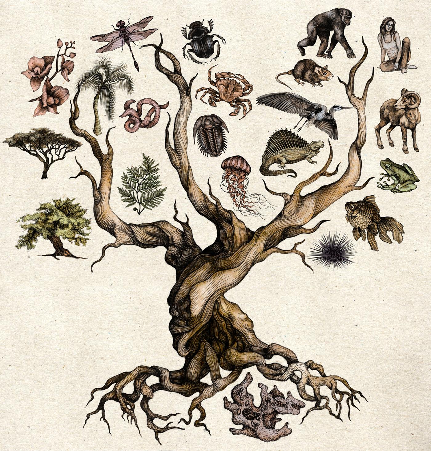 Darwin S Tree Of Life On Behance