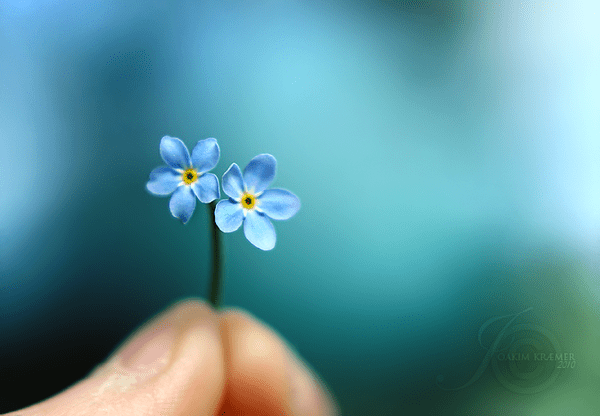 Forget me not on Behance
