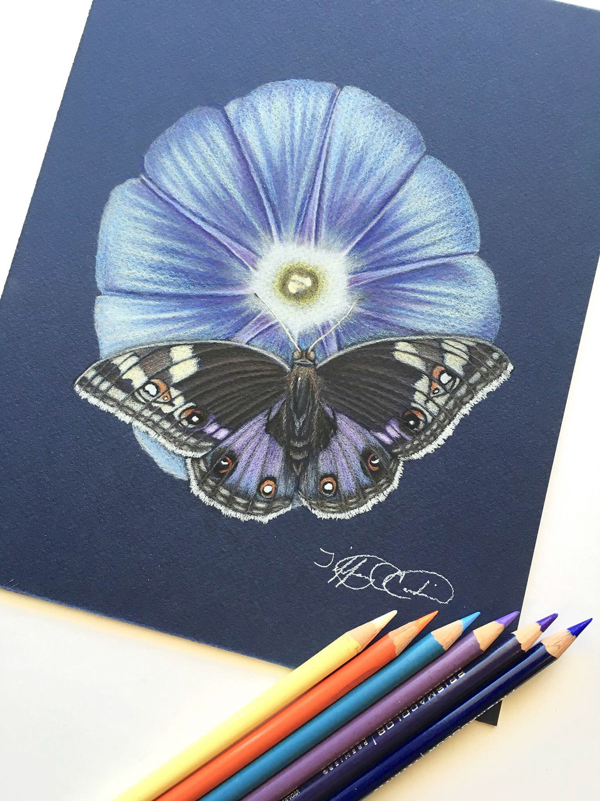 Morning Glory Flower And Butterfly Pencil Drawing On Behance