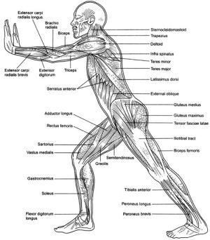 Muscular Weakness | Little Choices