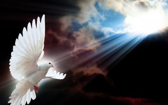 white-dove-wings-1280x720