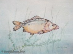 Mirror Carp (strangest commission ever!)