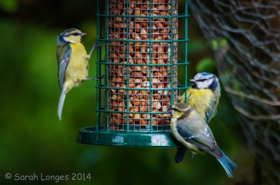 Gathering at the feeder