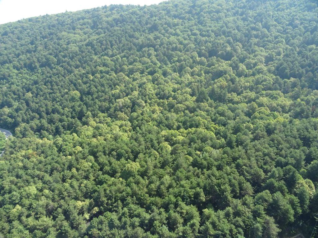 Bursa'da ormanlara girmek yasaklandı!