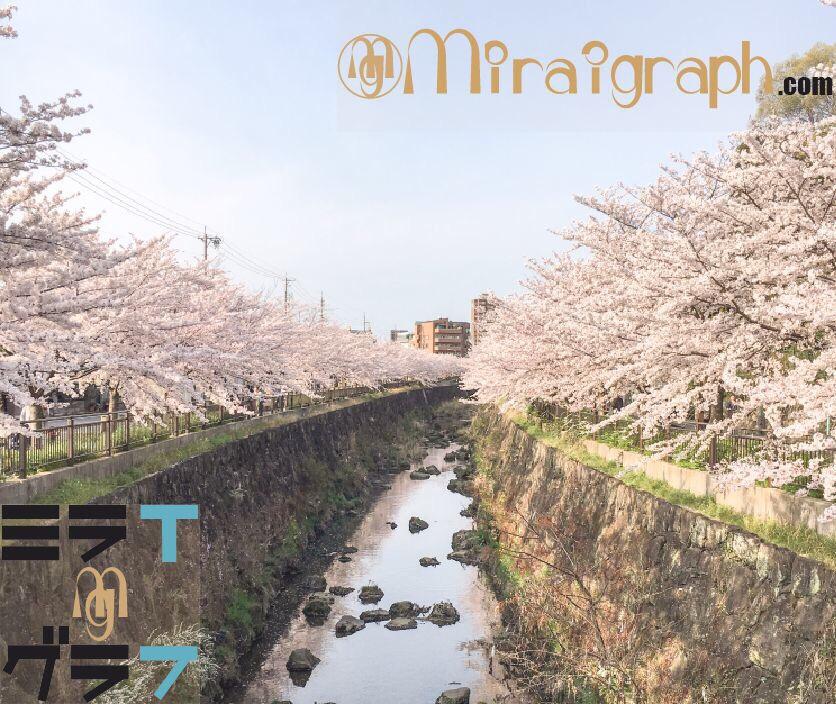 2018年桜開花満開の時期ミラグラ