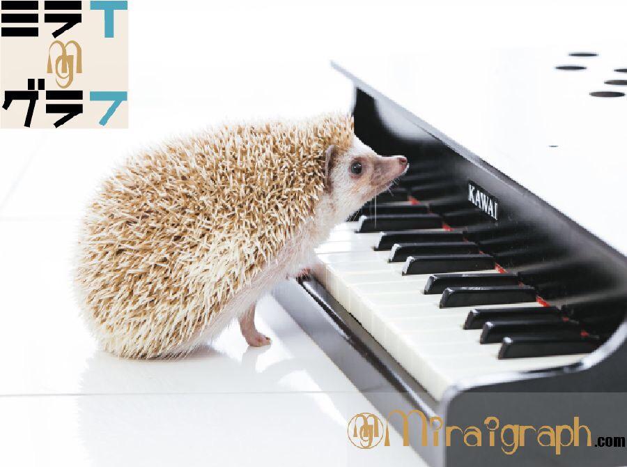 クラッシックで集中力・元気・癒しの効果をオススメの曲でご紹介 11月12日は(ヴィヴァルディの)四季の日『今日というミライグラフ365』