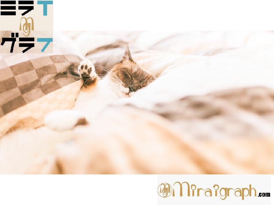 布団の種類とサイズを知ってあたたかく眠ろう 2月10日はふとんの日
