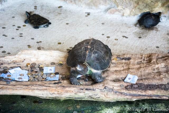 Tortugas en Cueva Kek Lok Tong
