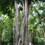 Jardín Botánico de Penang