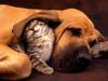 Cat_and_dog__the_best_friend