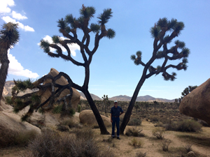 Dad at Joshua Tree