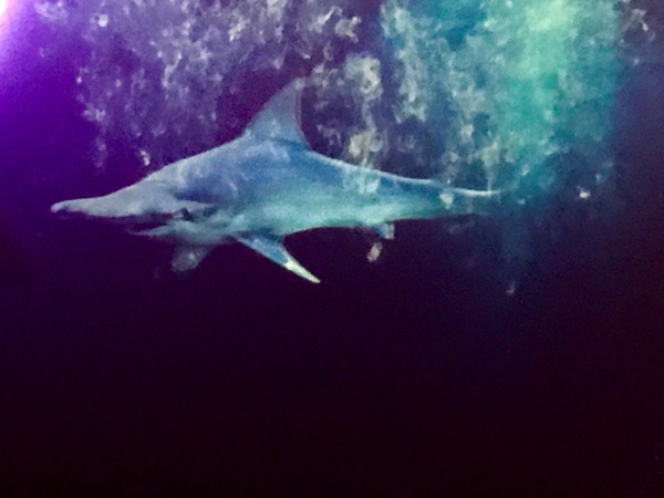 Holographic shark