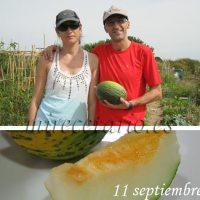 Cuándo recolectar un melón