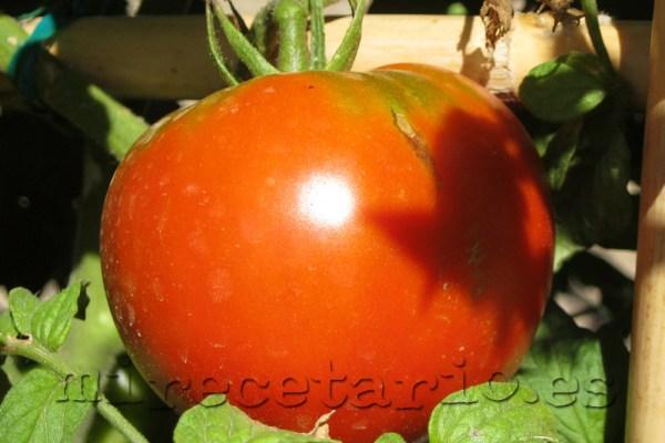 Tomate rojo madurado en su rama