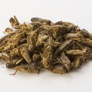 Le défi de demain : passage à l'entomophagie