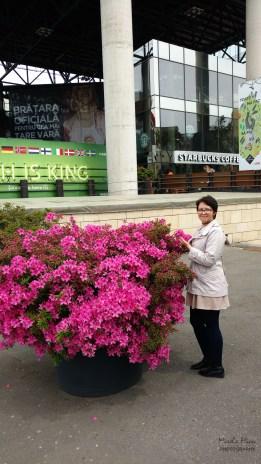 Flori de la Iulius Mall