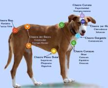 Las mascotas somatizan los conflictos de sus dueños