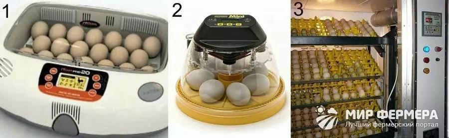 Welchen Inkubator für Zuhause wählen?
