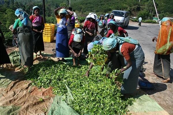 mujeres-indias-trabajando8