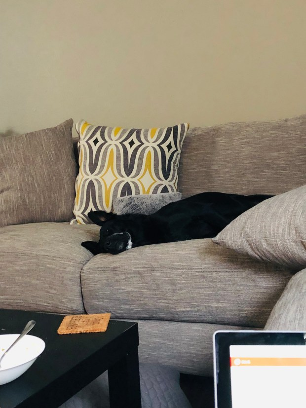 Chance asleep on the couch