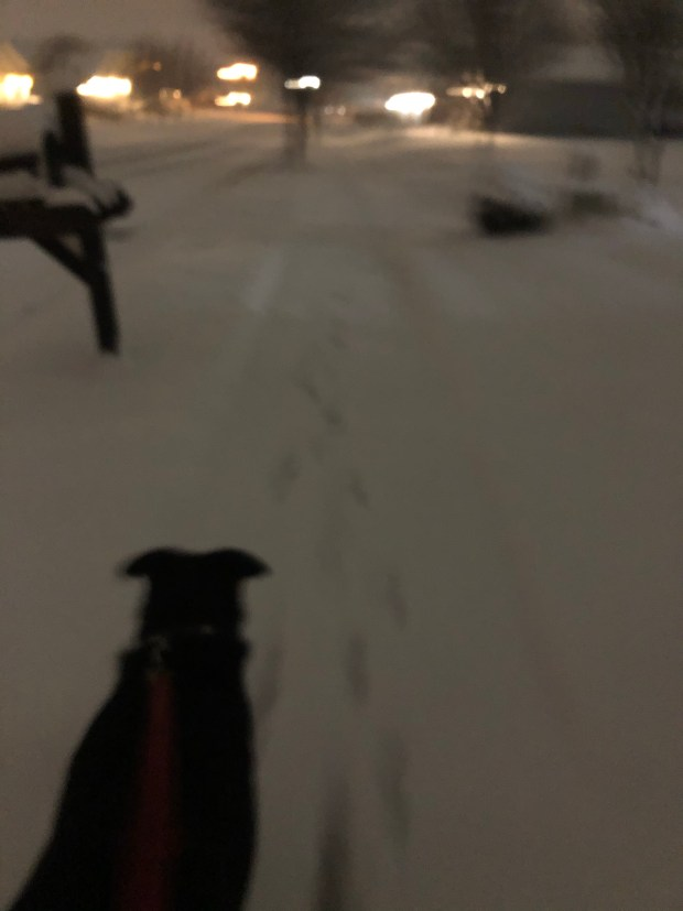 Dog walk in the snow