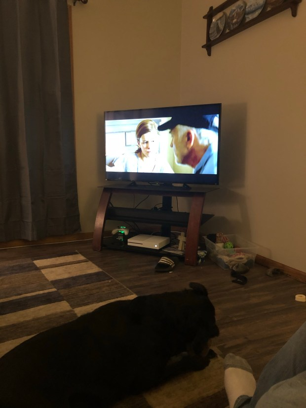 Watching movie with dogs