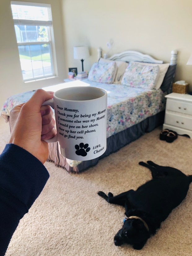 Coffee mug, clean bedroom, and Chance
