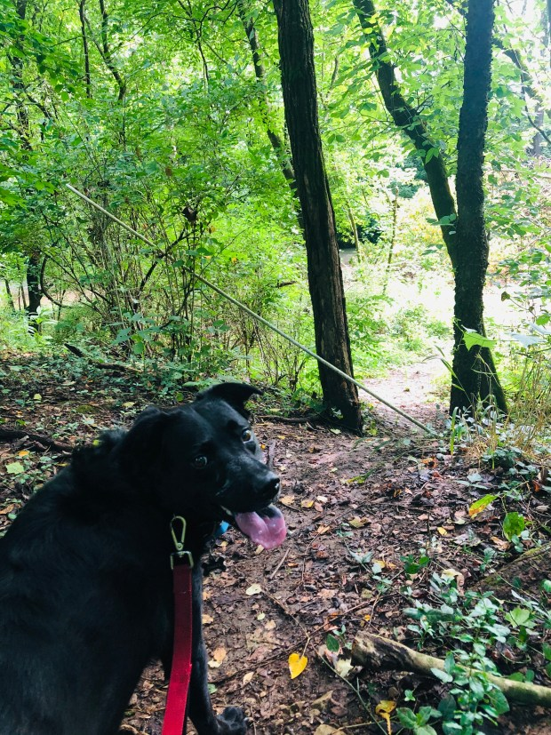 Chance standing in the forest