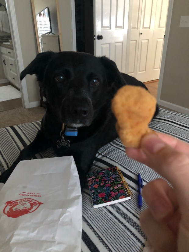 Chance waiting for chicken nugget