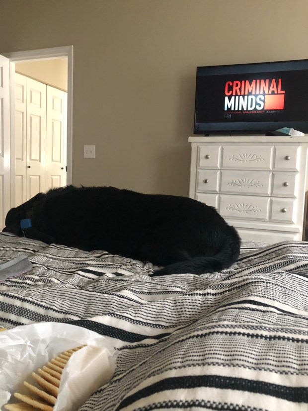 Chance laying in bed with me watching Criminal Minds