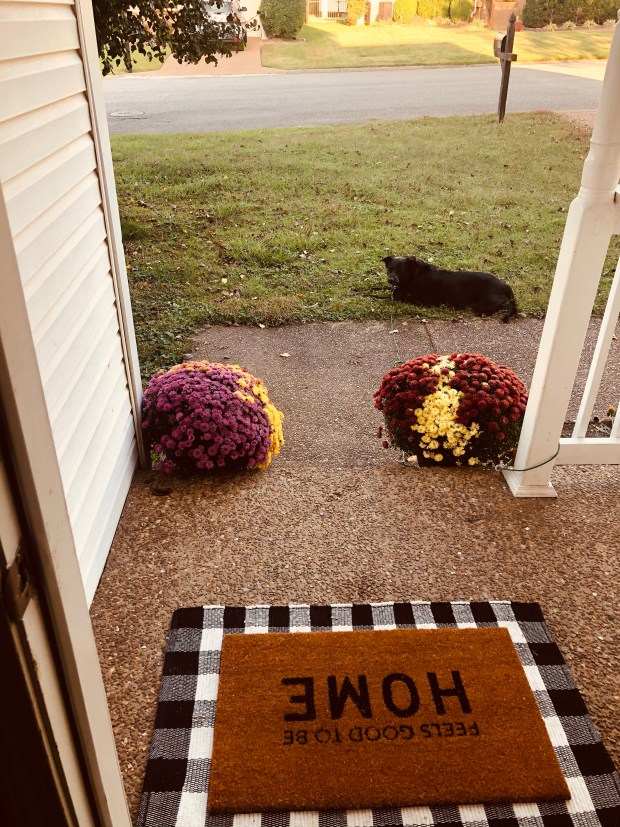 Fall porch decorations with dog